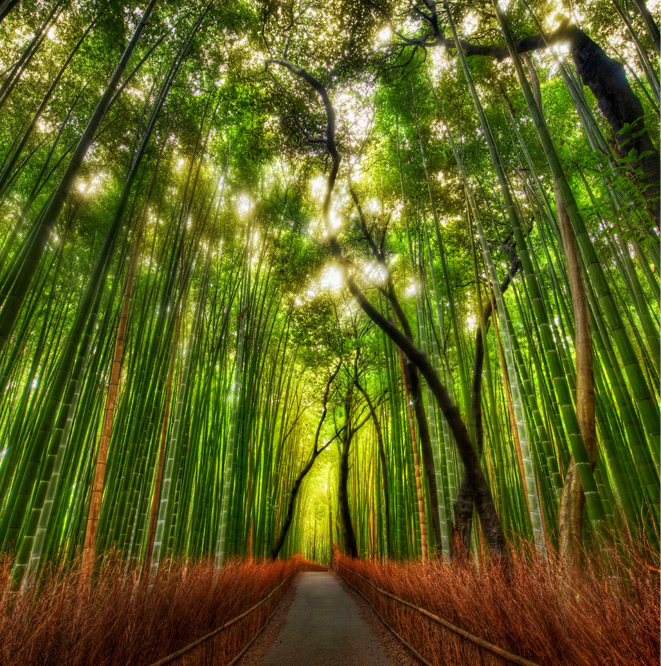 The Bamboo Forest by Trey Ratcliff