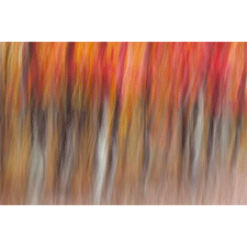 Motion blur of autumn-hued forest, Wisconsin