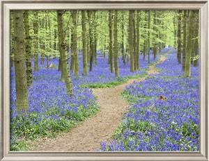Frank Lukasseck, Path Winding Through Beech Forest and Bluebells