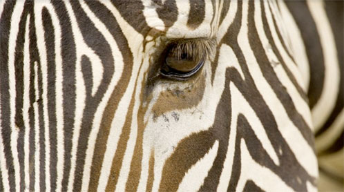 Surround yourself with images of natural phenomena and cultural treasures by some of the world's most brilliant photographers.